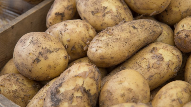 Hiinas tehakse kartulid Eesti teadlaste abiga nuudliteks