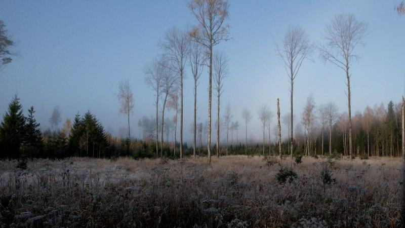 VIDEO | Eesti metsanduse arengukavas raiemahtude suurenemist ei tule