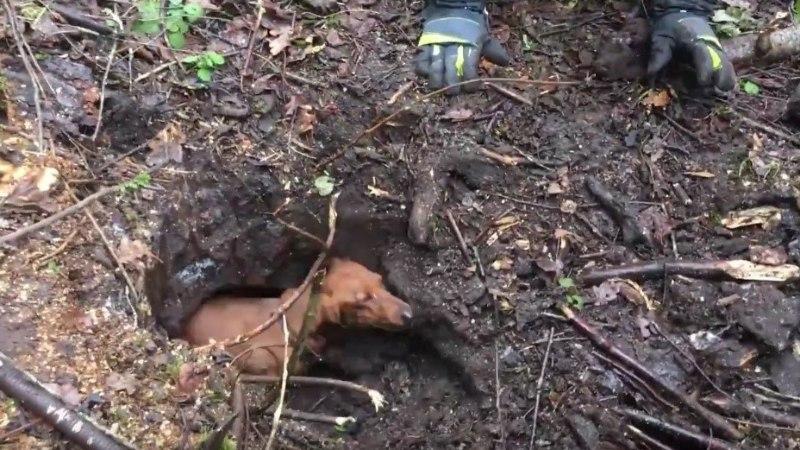 Koer kaevus, kakaduu puu otsas ja madu elutoas...