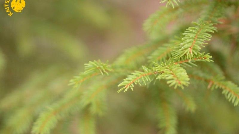 Ellujäämine metsas ehk Millist varakevadist näksimist loodusest leida võib