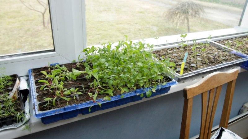 Kasvuhoone nõuab suurpuhastust