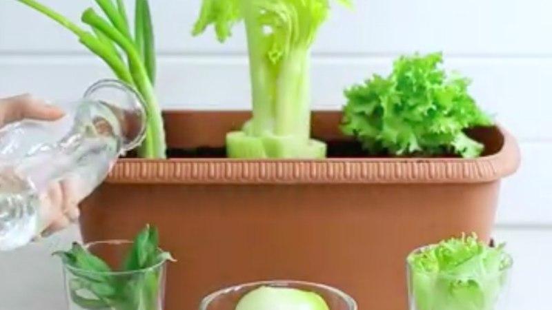 Kasvata aknal värsket salatit