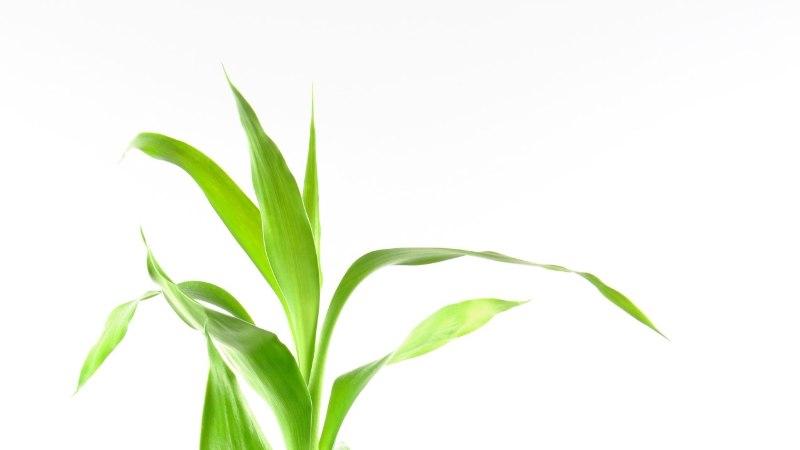 Seitse taime, mis täidavad su toa positiivse energiaga