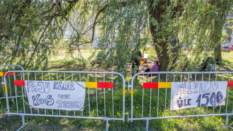 GALERII JA VIDEO | Paldiski maantee hõberemmelgat kaitsvate aktivistide grupp on kokku kuivanud, kuid räägib kohtuteele minekust