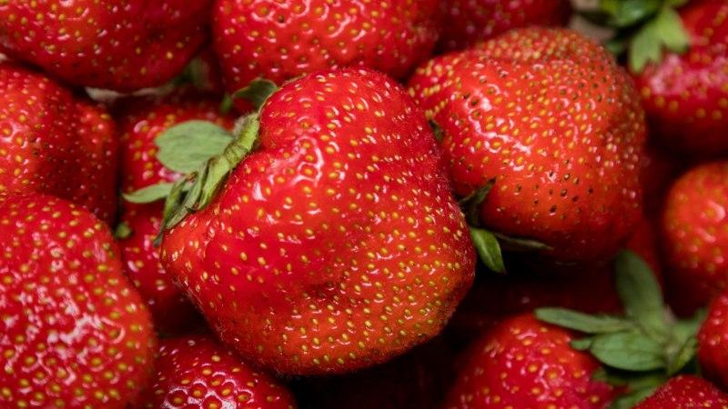 MÄLUMÄNG | Kas maasikatest isu juba täis?