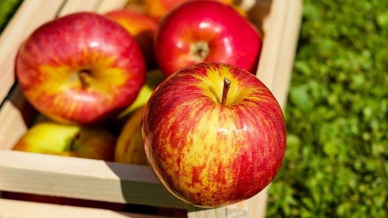 TERVIS TULEB: 5 põhjust, miks eelistada hooajalist toitu