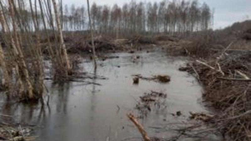 Eesti metsades kuulutati välja erakorraline olukord