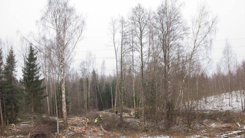 Keskkonnakomisjon arutab olukorda Eesti metsades