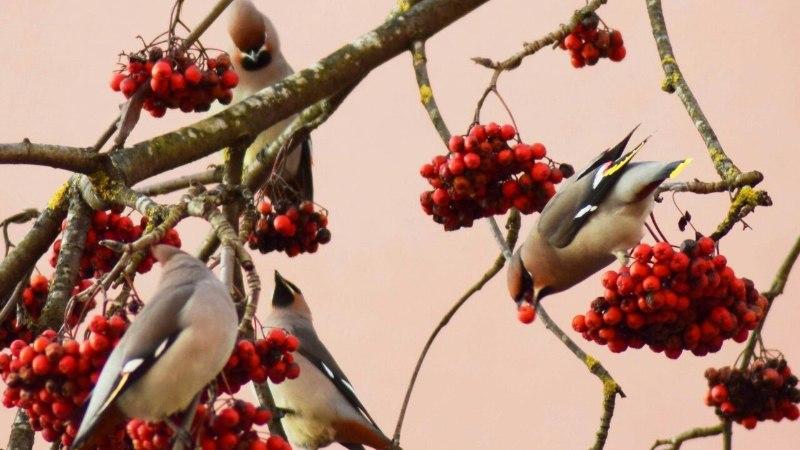 FOTOD | Kas sina oled juba kohanud seda haruldaselt kaunist lindu?