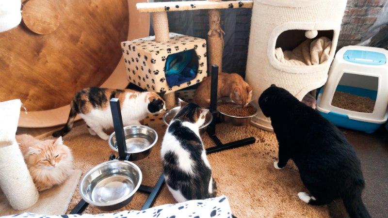 Kodutute loomade päästeingel: kunagi pole tuba tühi – kui üks koju läheb, tuleb teine asemele!