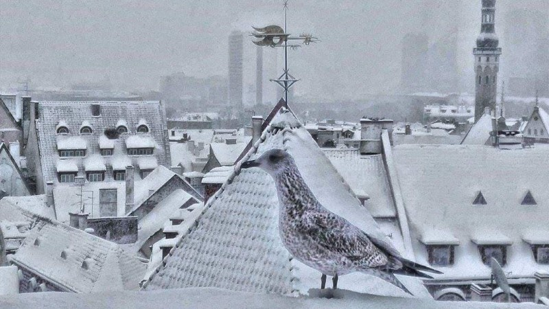 """Антс Вахтер: """"Я хочу, чтобы люди, глядя на мои фотографии, захотели приехать в Таллинн"""""""