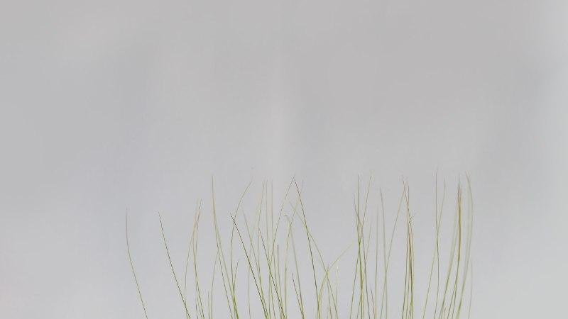 NAISTELEHT 55+ | Mis imeloom on ÕHULILL?