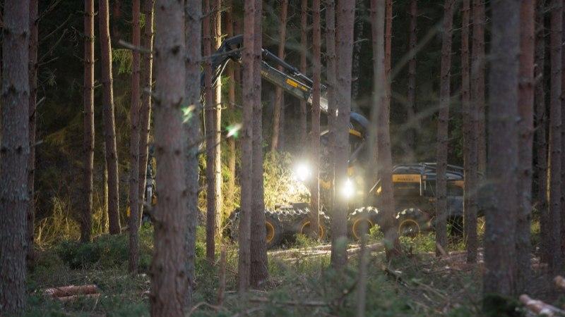Metsateadlane: lageraie pole metsa lõpp