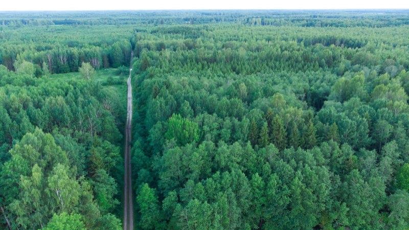 Est-For läheb Pärnumaale tselluloositehase rajamist arutama