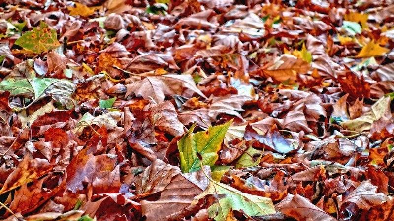 Lehed on vaja aias kokku riisuda! Milline reha on kõige parem? Aitame sul valida!