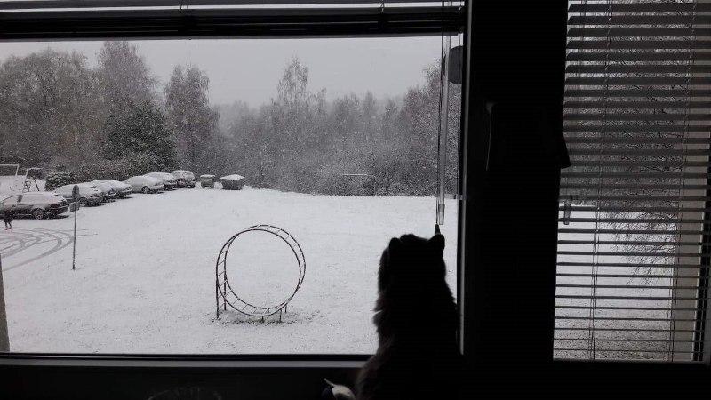 Фото читателей: смотрите, первый снег по всей Эстонии