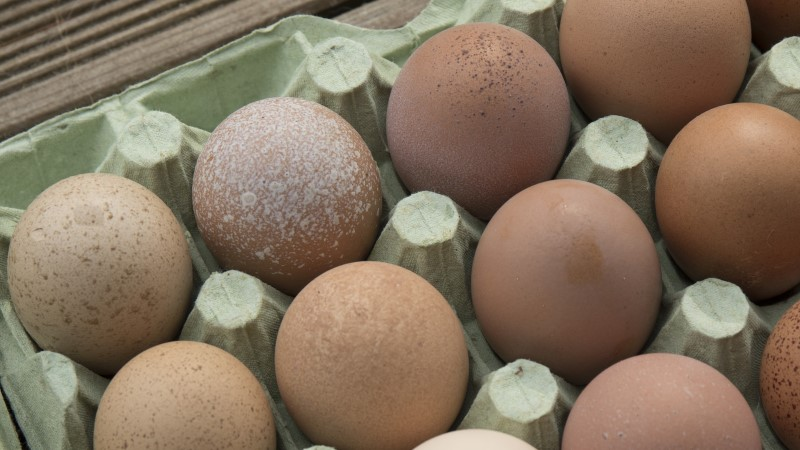Ettevaatust! Eestis olid müügis salmonellaga nakatunud munad