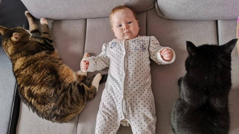 HELENI BEEBIBLOGI | Kuidas saavad omavahel läbi beebi ja minu kaks kassi?