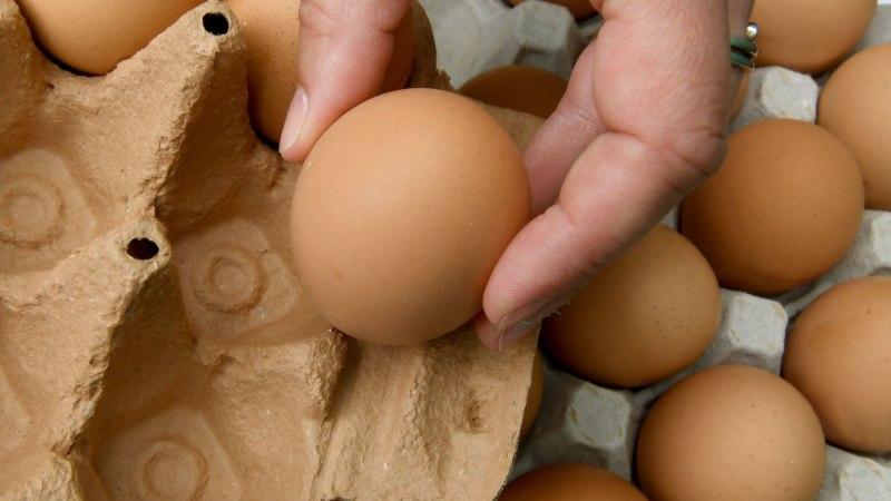 Департамент: все яичные фермы OÜ Sanlind в Валгамаа заражены сальмонеллой