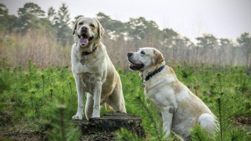 KAS SUL ON JUBA KOER? Nii mõjutab koer tervist ja isegi eluiga