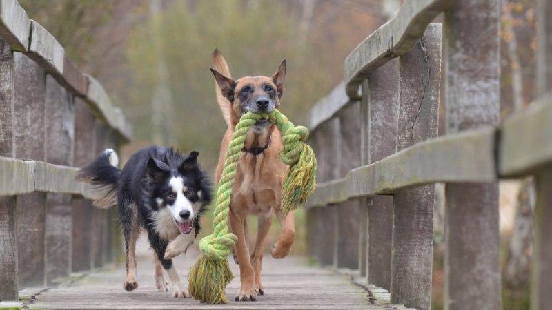 Loomaomanik, ole valvas! Sinu lemmik võib tuua tuppa erinevaid inimesele ohtlikke haigusi