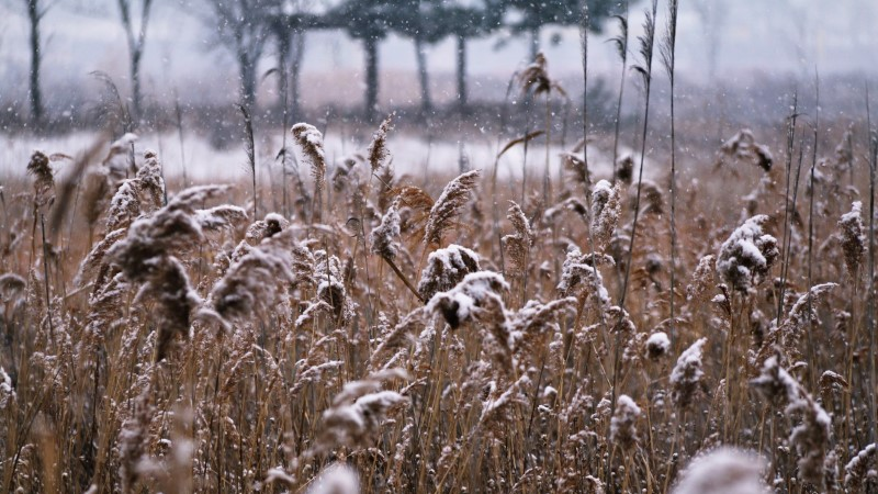 Esimene lumi kutsub tantsule!