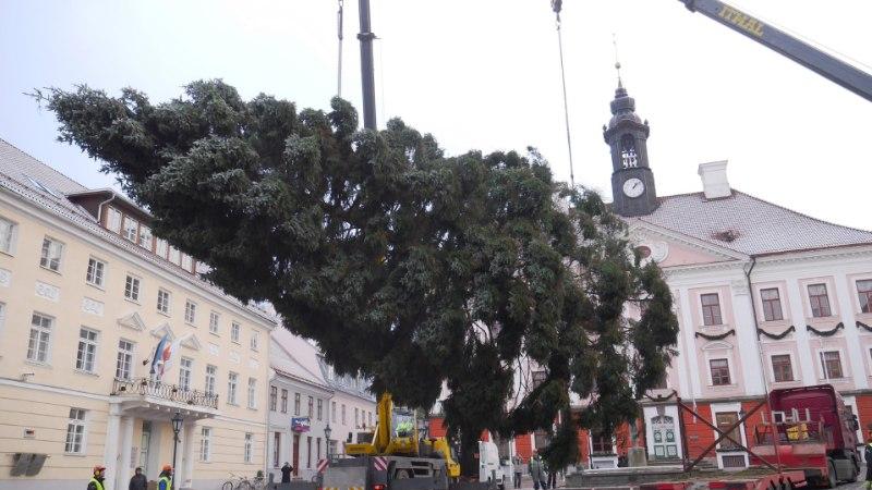 Tartu Raekoja platsil sünnib Eesti suurim ühine jõulutervitus