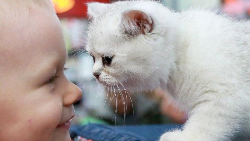 Laste allergiariski langetab iga täiendav lemmikloom
