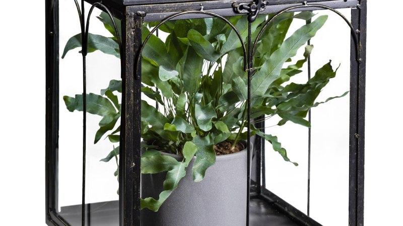 Mööbel taimedele