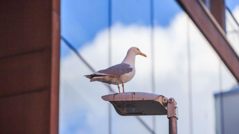 VIKTORIIN | Milliste loomade, lindude ja roomajatega pidid päästjat sel aastal kokku puutuma?