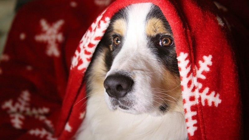 Mida teha kui raketipaugud hirmutavad koera?