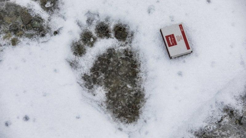 FOTOD | Unine karuema ja tema kolm poega otsisid Raplas öömaja