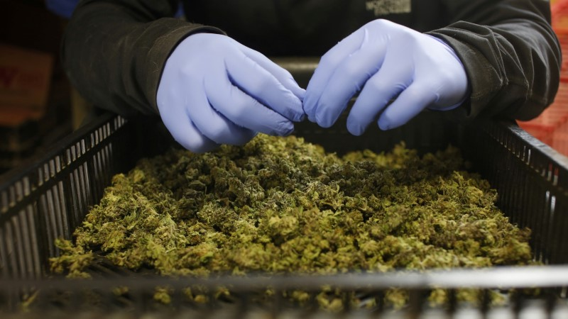 Люксембург собирается полностью легализовать марихуану