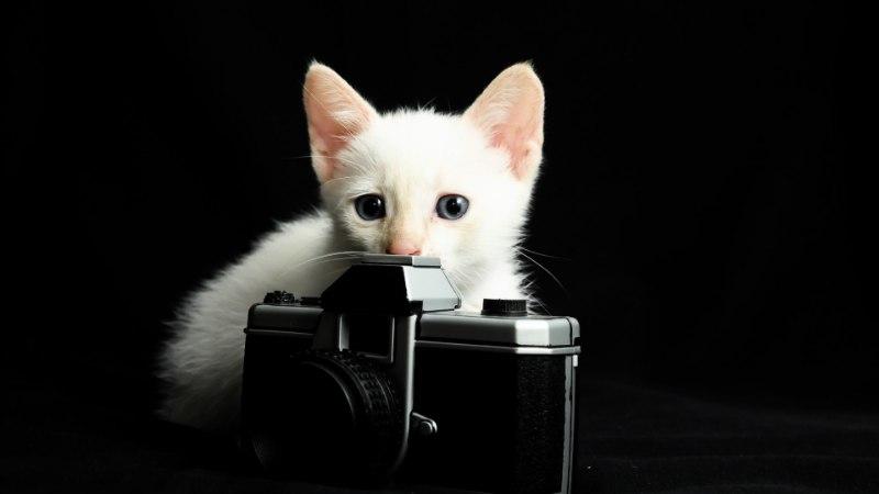 VEIDER JA NALJAKAS: vaata, milliste trikkidega saavad hakkama kassid!