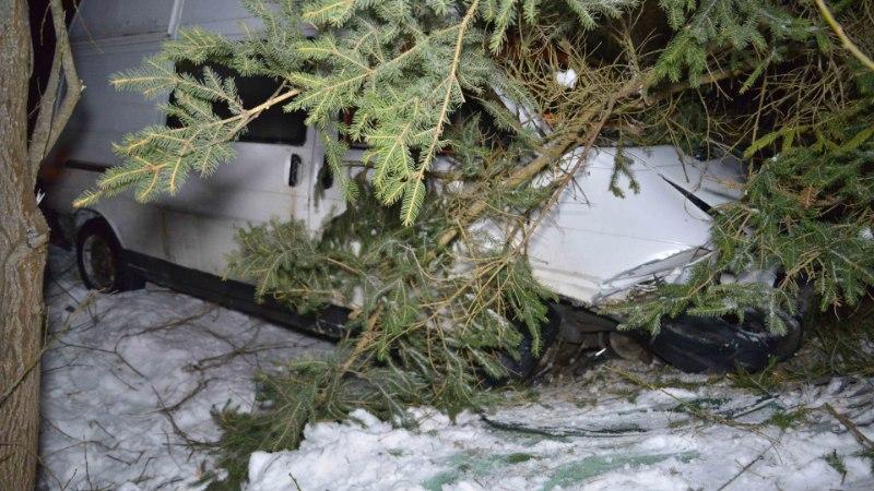 GALERII JA VIDEO | Koduõlut mekkinud sohver põrutas kuusehekki, lõhkus enda ja auto