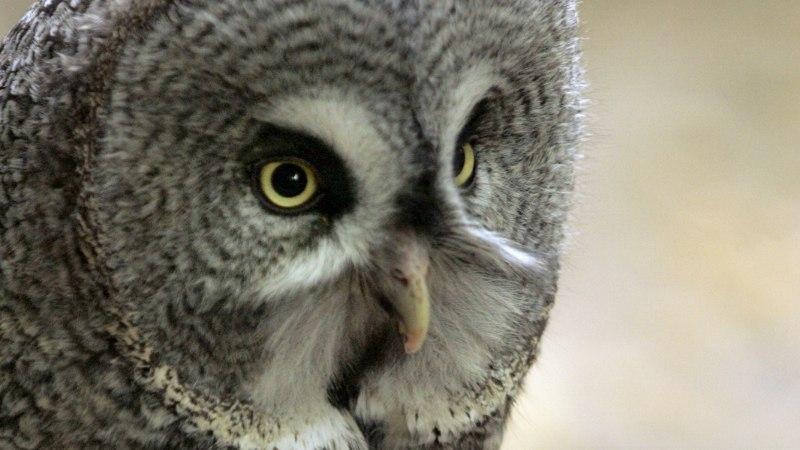 Lindude pesitsusperiood kiirustab metsatöid tagant