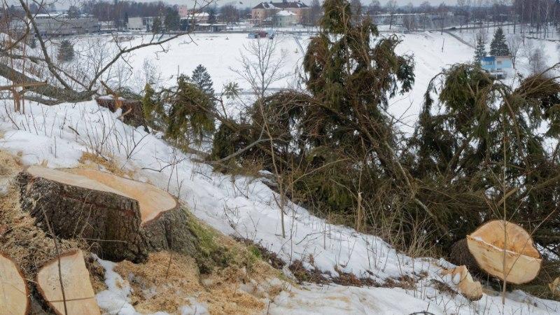 LUGEJAKIRI JA FOTOD: Otepää Linnamäel on tehtud sanitaarraie asemel lageraie