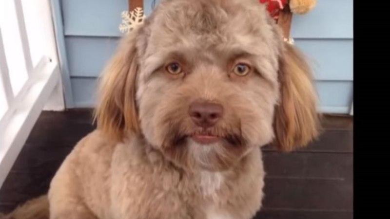 FOTO JA VIDEO | Internetti hullutab inimnäoga koer