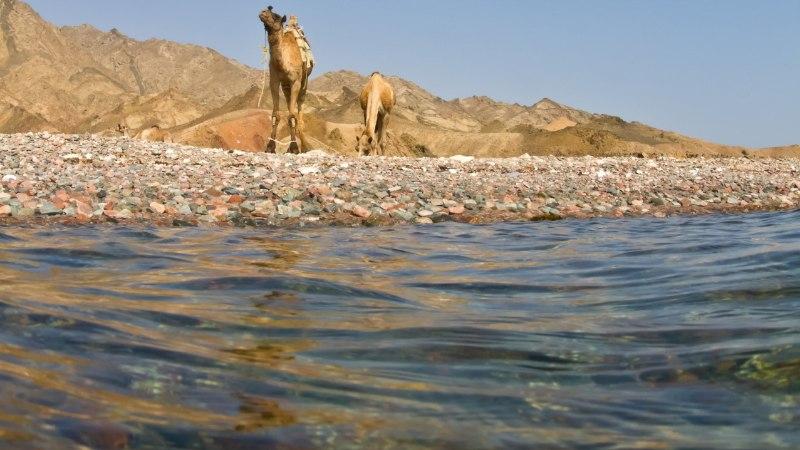 OOTAMATU VALIK: bikiinides naine sünnitas Punases meres