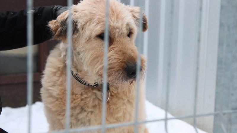 VIDEO | Jüri Aarma puges kodutu koeraga ühte puuri
