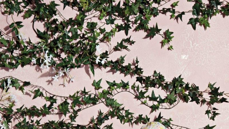TFW   Bebe Organic kollektsiooni inspireeris loodus ning säästlik elustiil