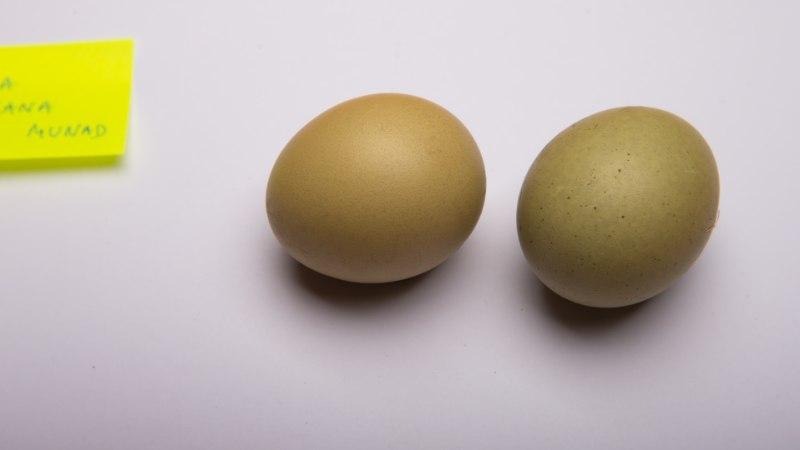 ÕHTULEHE KATSE: Milliste looduslike värvidega saab munadele pühadeilme ja millistega mitte?