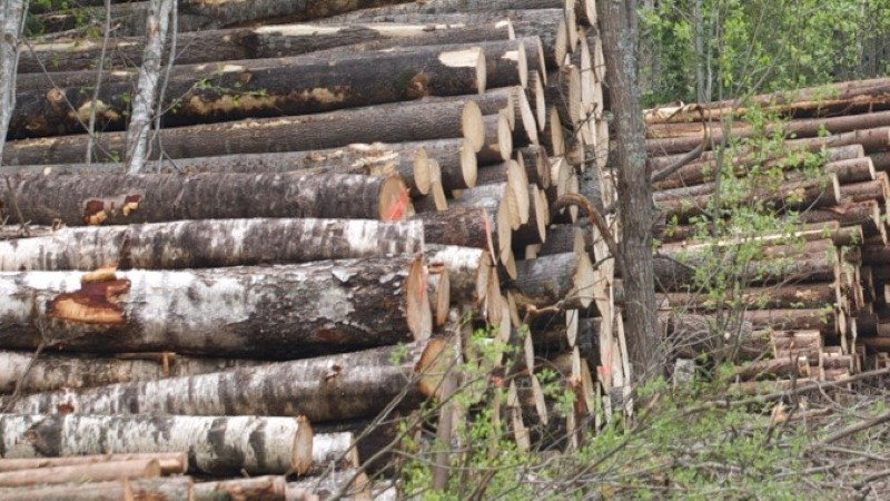 Vastukaja | Milline on Eesti metsade seis tegelikult?