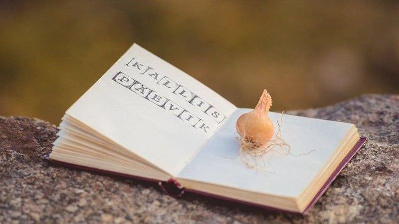 BLOGIAUHINNAD | Blogija Triin Kukk: head mõtted tuleb kohe kirja panna, ajast ja kohast sõltumata