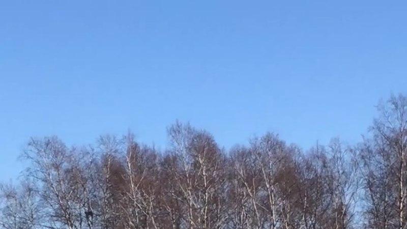 VIDEO ja FOTOD | PÕLLUMEHED HÄDAS: haned hävitavad viljasaagi!