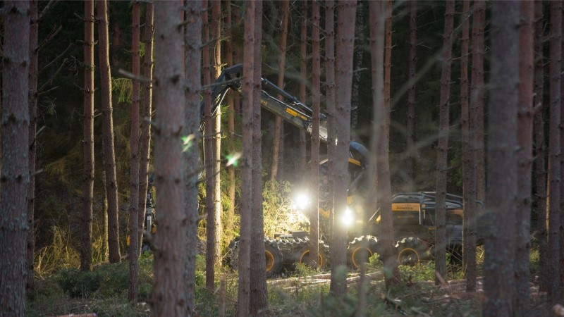 Rootsi teadlane: Eesti-sugusel metsarikkal riigil on kohustus süsiniku sidumise koormust maailmaga jagada