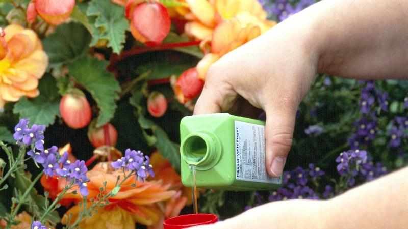 KODUKIRI TULETAB MEELDE: aiataimed vajavad väetist