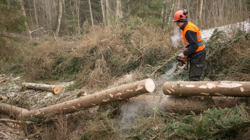 EKRE tegi kongressil laialdasema metsaraiumise toetuseks jõulist ajupesu