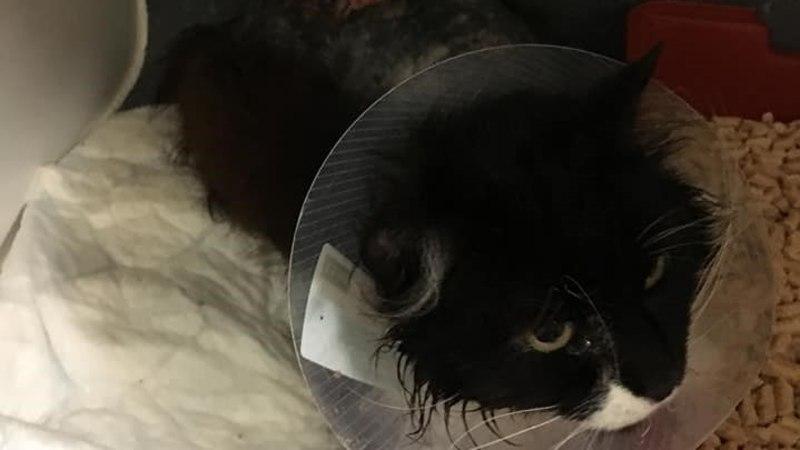 FOTOD | Narvas valas julmur kaks kassi happega üle