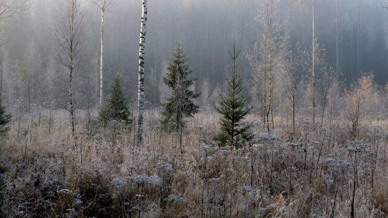 Vilkale metsamüügile annavad hoogu poliitikud ja roheaktivistid ning see on ohtlik
